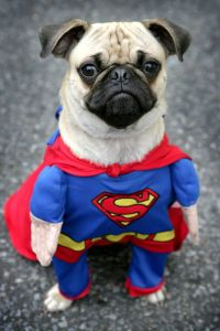 Willis-dressed-as-Superman-1944009